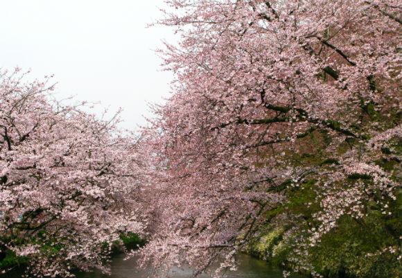 お花見 名古屋